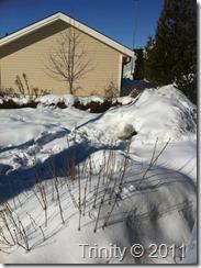 Syrinbuske under snø