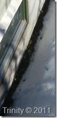 Jordbærplanter under snøen