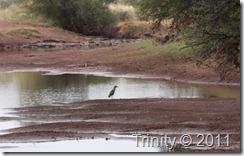Vadefugl - Namibia