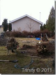 Syrinbusken er endelig fjernet