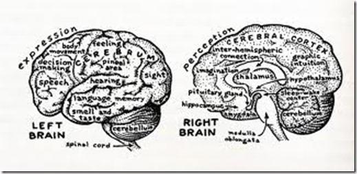 venstre og høyre hjernehalvdel