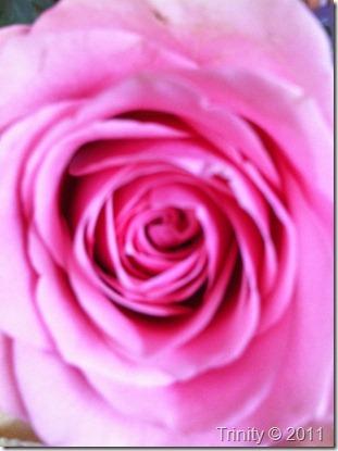 Fokus på det vakre - vil gi et vakkert liv ;-)