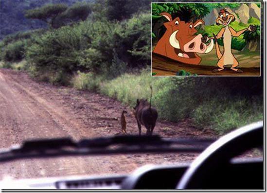 Timon og Pumba i virkeligheten?