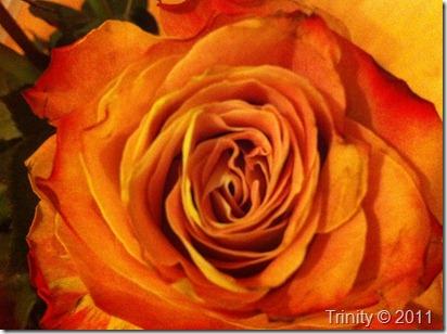 En rose er noe av det mest perfekte jeg vet om - jeg vil tiltrekke meg mer av det perfekte ved å tenke kjærlighet til rosen