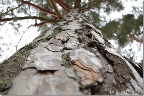 Trærne strekker seg med all sin tålmodighet mot Universets kraft