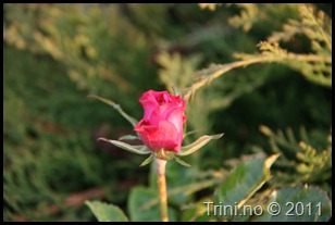 Vakre blomster kan hjelpe meg å snu følelsene mine på et blunk