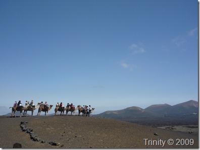 Hvis du drømmer om å dra på kamelsafari har du alltid et valg - du kan velge å gjøre det, eller du kan velge å la være