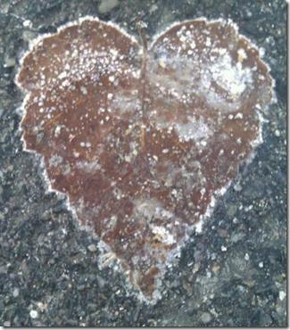 Ha tillit til at du vil få og du vil få - et naturens kjærlighetssymbol