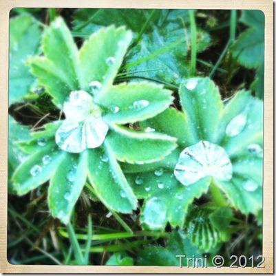 Plantene gråter også for deg, husk det :-) Og det er like vakkert som en solnedgang