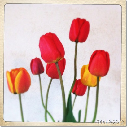 Takknemlighet kan vises gjennom handlinger, holdninger og med blomster :-)