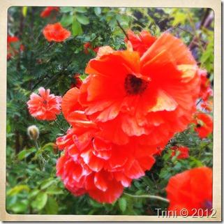 Vakre blomster kan være med å gi lykkefølelse