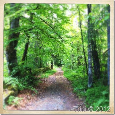 Velkommen inn i denne vakre skogen. Den er så lys og fristende at det er vanskelig å ikke gå inn og gå langs skogsstien heller enn langs veien. Trekke inn den gode energien som befinner seg inne i skogen og bare nyte livet - perfekt